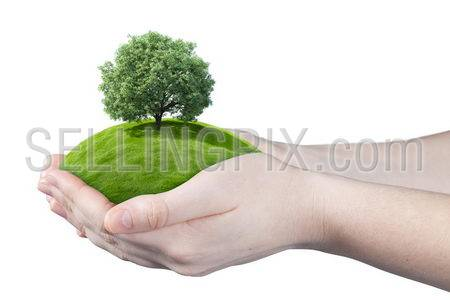 Hands holding clear green meadow with thick sole tree. Concept for growing business, ecology, freshness, freedom and other lifestyle issues. Green fields collection.