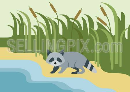 Raccoon flat design cartoon vector wild animal on the bank of the river. Flat zoo children collection.