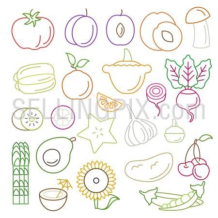 Line art flat graphical style high quality fruit vegetable icon set. Apple lemon pomegranate pineapple plum coffee bean sunflower lime melon corn peas beets celery sprouts. World of lineart collection.