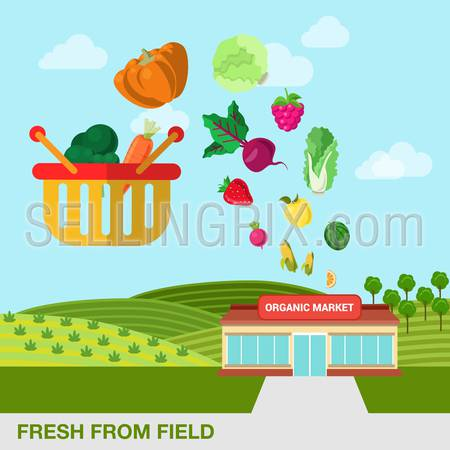 Flat style agriculture fruit berry vegetable fresh field organic market web infographic icons. Pumpkin cabbage beet berry watermelon carrot broccoli salad apple cart. Website infographics collection.