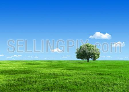 Nature collection – Tree on meadow template