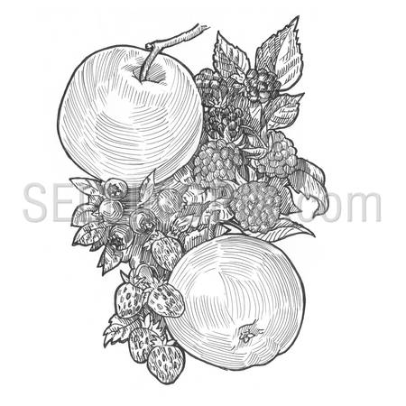 Engraving style hatching pen pencil painting illustration concept fruits collage image. Apples, blueberries, currants, strawberries, raspberries, berries on branch with leaves. Engrave hatch drawing.