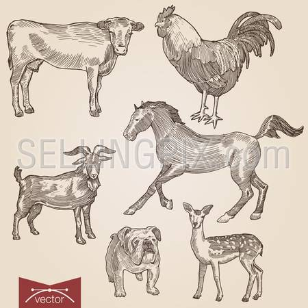 Engraving style pen pencil crosshatch hatching paper painting retro vintage vector lineart illustration domestic farm animals pets set. Goat and cow, horse, bulldog, lamb and rooster.